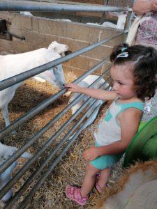 la micro creche de Chazelles en visite à la ferme de Rouillac